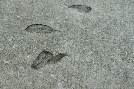 Leave impressions in the cement on a sidewalk. Фото со стока