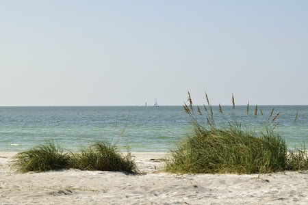 sea oats: Sea oats and grass on a sand dune on the beach.