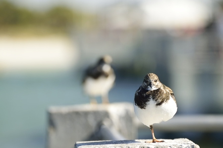 fishing pier: Shore bird resting on a cement pillar at fishing pier.