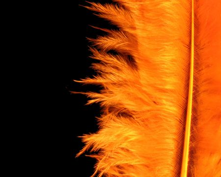 Close up of yellow feather on black photo
