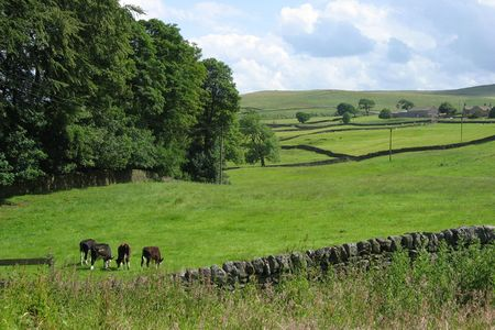 Countryside in Yorkshire Dales