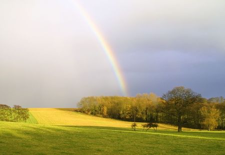 Rainbow falling onto trees in Yorkshire countryside meadow photo