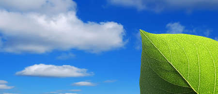 Close-up of green leaf on cloudy blue sky Stock Photo