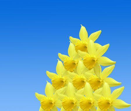 r�p�titif: R�p�titifs r�sum� des fleurs de la jonquille sur bleu