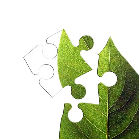 Jigsaw piece of isolated green leaf on white Stock Photo