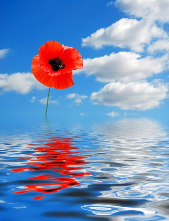 composite: Composite image of poppy, beautiful sky and water reflection