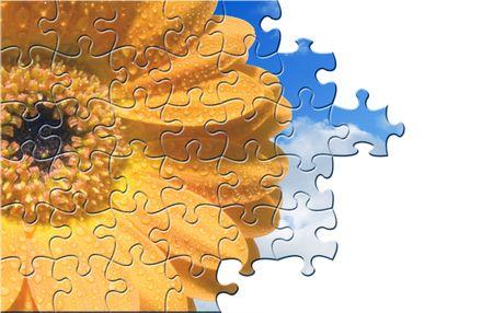 Calendula flower jigsaw puzzle over white background photo