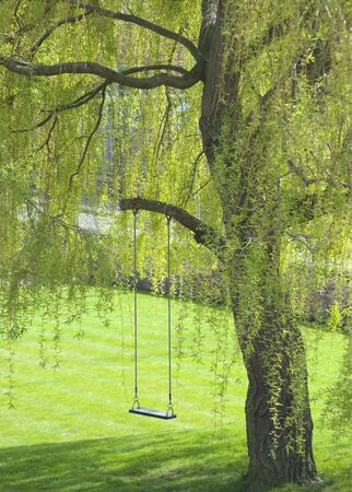 hangs: Empty swing hangs from tree branch in garden Stock Photo