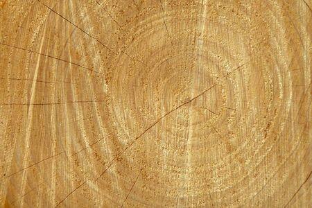 Closeup of freshly cut tree showing wood texture photo