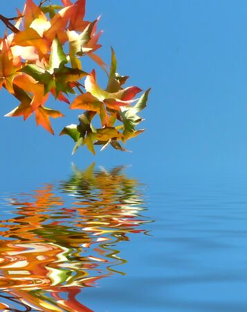 simulation: Autumn leaves against blue sky with flood simulation