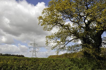 Tree and hedge in foreground with Pylons in field behind  photo