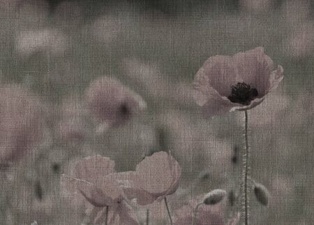 subdued: Abstract image of wild poppies overlaid on cloth texture