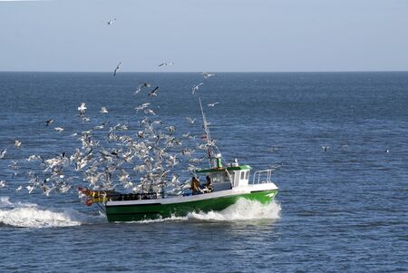 fishing cabin: Fishing boat returning to port followed by hungry seagulls