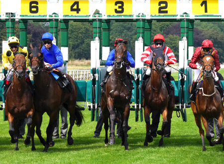 Horses and jockeys leaving starting gate at York Races Editorial