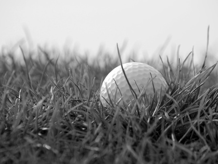 golfball: Closeup of golfball in rough grass on edge of golf course.