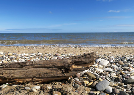 stoney: Sun shines on drift wood on stoney beach
