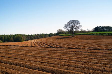 Isolated tree stands of edge of ploughed farmers field