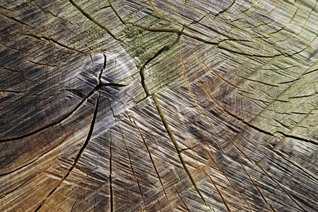 sawn: Closeup of sawn tree trunk for backgrounds