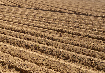 ploughed: Telephoto view of ridges in farmers ploughed field Stock Photo