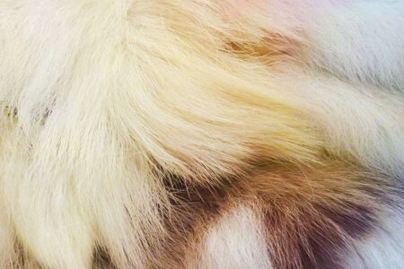 fur: Closeup of a section of animal fur with colour splashes Stock Photo