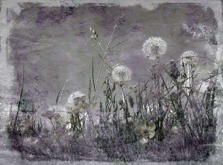 moody: Dark moody grunge effect applied to dandelion clocks