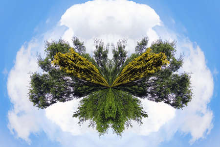applied: Small planet effect applied to trees with cloud sky Stock Photo