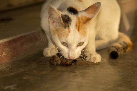 redbreast: Cats hunt birds.