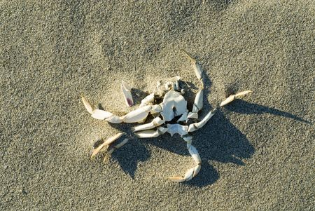 dead crab on beach
