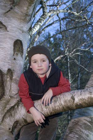 lucas: Boy hanging in tree Stock Photo