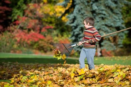 boy racking fallen leaves
