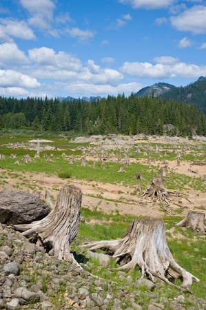 wiped out: Clear cut area and forested area behind