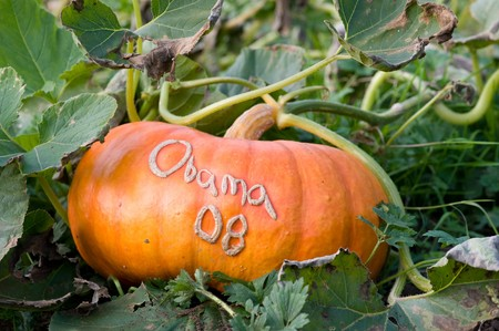 obama: Pumpkin with Obama grown in outside