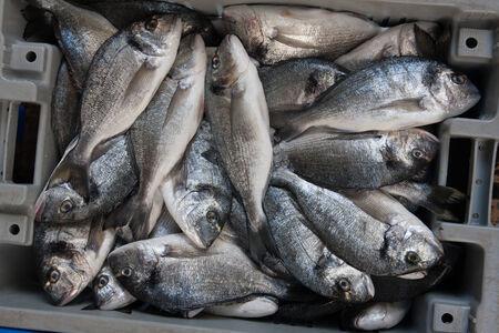 fresh Sparus aurata fishes