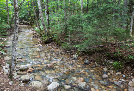 stream in the White Mountains of New Hampshire