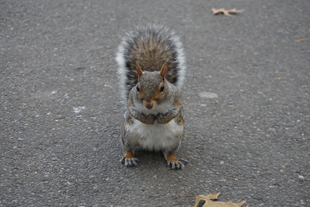 Squirrels at Central Park.