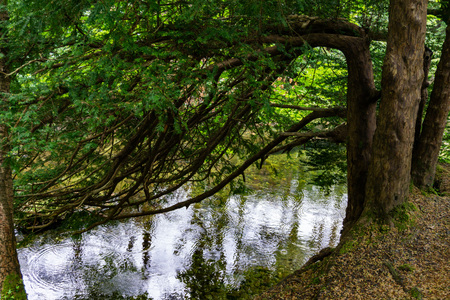 trees, lakes and streams in Tollymore Forest Park, Ireland Reklamní fotografie