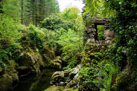 trees, lakes and streams in Tollymore Forest Park