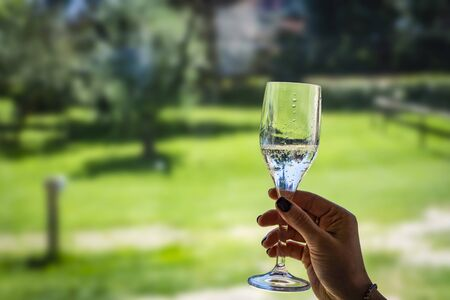 closeup of champagne in glass in the gras background Imagens