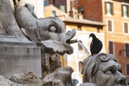 Veduta di Roma, Italia. Particolare della Fontana del Pantheon con il piccione sopra la testa. Archivio Fotografico