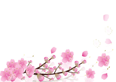 Pink  flowers Spring background . sakura , cherry blossom ,white with copy space,isolated on white background, flowers corner border ,vector illustration Ilustracja