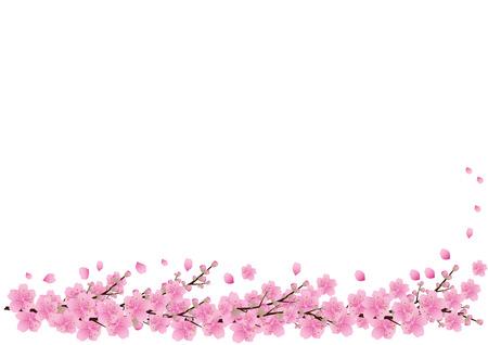 Cherry Blossom Border Background