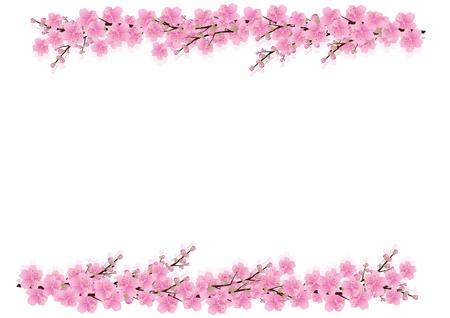 핑크 꽃 배경 봄. 사쿠라, 벚꽃, 흰색 배경, 복사 공간이 격리 된 흰색, 꽃 모서리 테두리, 벡터 일러스트 레이 션