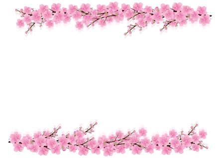 Pink  flowers Spring background . sakura , cherry blossom ,white with copy space,isolated on white background, flowers corner border ,vector illustration Çizim