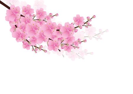 flores en esquina: Flores rosadas primavera de fondo. sakura, flor de cerezo, blanco, con copia espacio, aislado en fondo blanco, frontera flores esquina, ilustraci�n vectorial