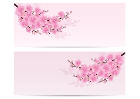 blossom background: Sakura flowers , Cherry blossom  invitation cards pink background