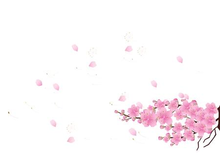 Sakura flowers Spring background  . cherry blossom vector illustration Ilustração
