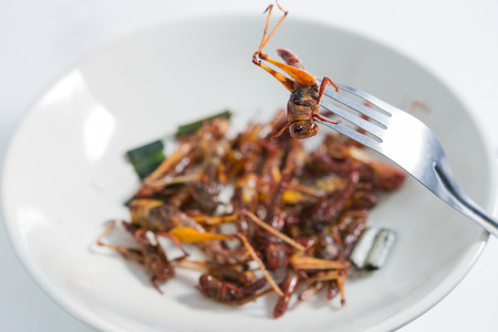 Fried insects  Protein rich food Standard-Bild