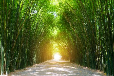 햇빛 터널 대나무 나무입니다.