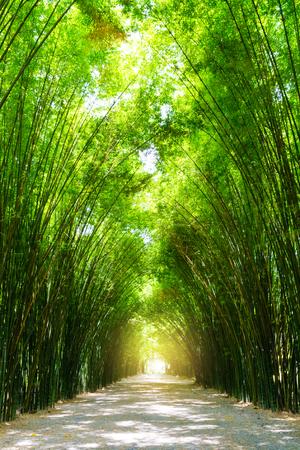 árbol de bambú del túnel con la flama de la