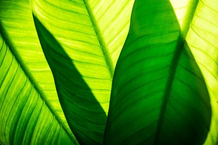 自然の緑の葉の背景、熱帯群葉のテクスチャのクローズ アップ。